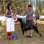 Best Senior/Grand Sweepstakes:  Cha-Rish Midnight Hunter For JJ Owned By Judy & George Johnson